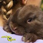 Alimentation et santé : comment nourrir un lapin malade ?