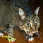 Causes et symptômes de l'asthme chez le chat