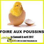 Foire aux poussins à Dombasle (54), le samedi 09 avril 2017