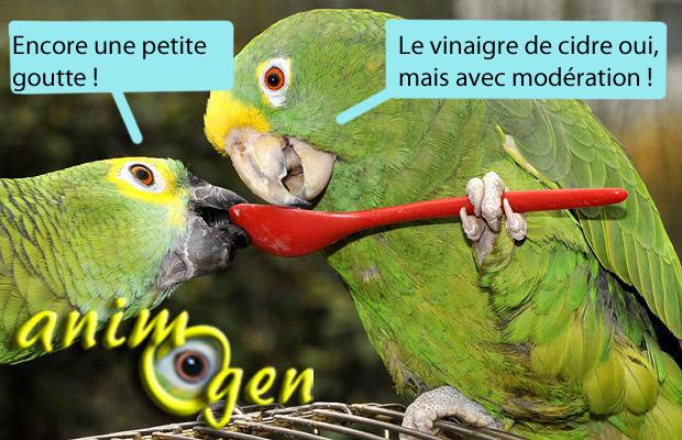 Santé : les vertus du vinaigre de cidre pour nos perroquets