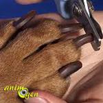 Animogen - Comment couper les ongles de chien ...
