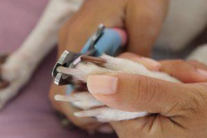 Comment couper les griffes de votre chien ?