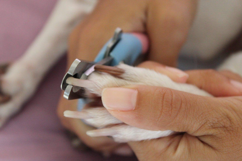 Comment couper les griffes de votre chien animogen - Comment couper un angle a 45 degres ...