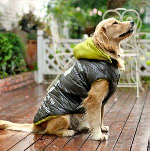 Faut-il habiller nos chiens en hiver ?
