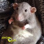 Comment prolonger l'espérance de vie de nos rats et souris de compagnie ?