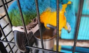 Les facteurs extérieurs à l'origine de troubles du comportement chez le perroquet