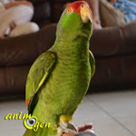 Les facteurs humains à l'origine de troubles du comportement chez le perroquet