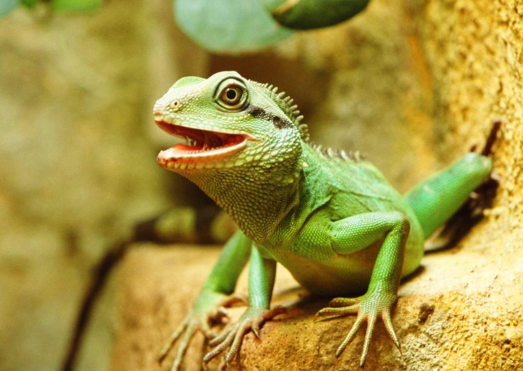 Comment savoir si un reptile est énervé ou stressé ?