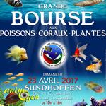 Bourse aux Poissons, Coraux, Plantes à Sundhoffen (), le dimanche 23 avril 2017