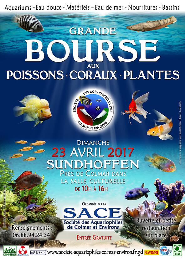 Bourse aux poissons coraux plantes sundhoffen 68 le for Salon aquariophile 2017