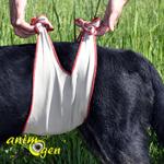 Santé : comment déceler les signes d'incontinence urinaire chez nos chiens ? (fuites urinaires)