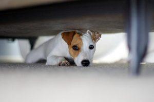 Comment vaincre la peur de l'orage chez les chiens ?