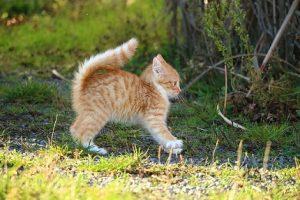 Chats des villes et chats des champs, les différences de comportement