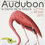 """Exposition """"Jean-Jacques Audubon, le Génie de la Nature"""" à Saint Georges de Montaigu (85), du 1 er mai au 30 septembre 2017"""