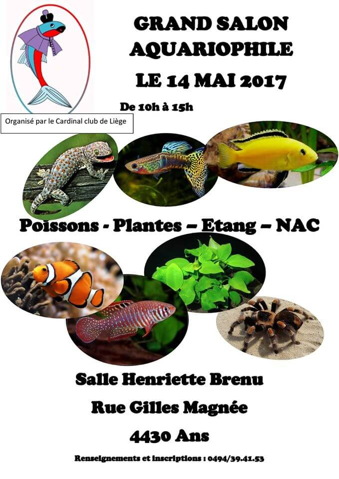 grand salon aquariophile ans belgique le dimanche 14