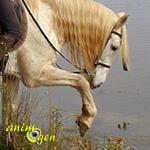 Comportement : mon cheval a peur d'entrer dans l'eau (causes et solutions)