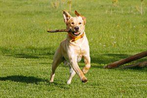 Le jeu, une base de l'éducation canine