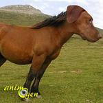 Pourquoi les chevaux ne sont-ils pas des chiens ?
