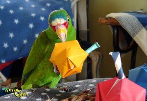 Maracas en origami, un été en samba pour nos perroquets