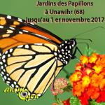 Jardins des papillons à Unawihr (68), jusqu'au 1 er novembre 2017